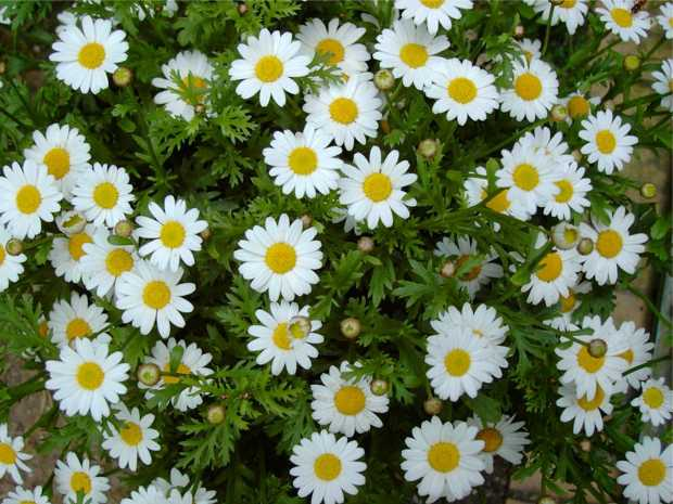 Line Your Garden With Helpful Plants