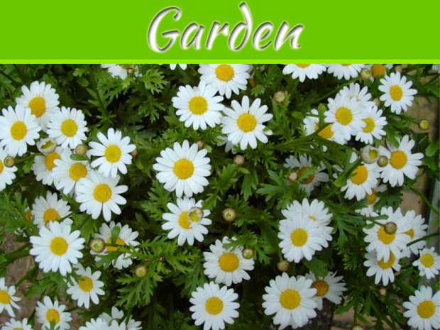 Keep Your Garden Pest Free the Natural Way