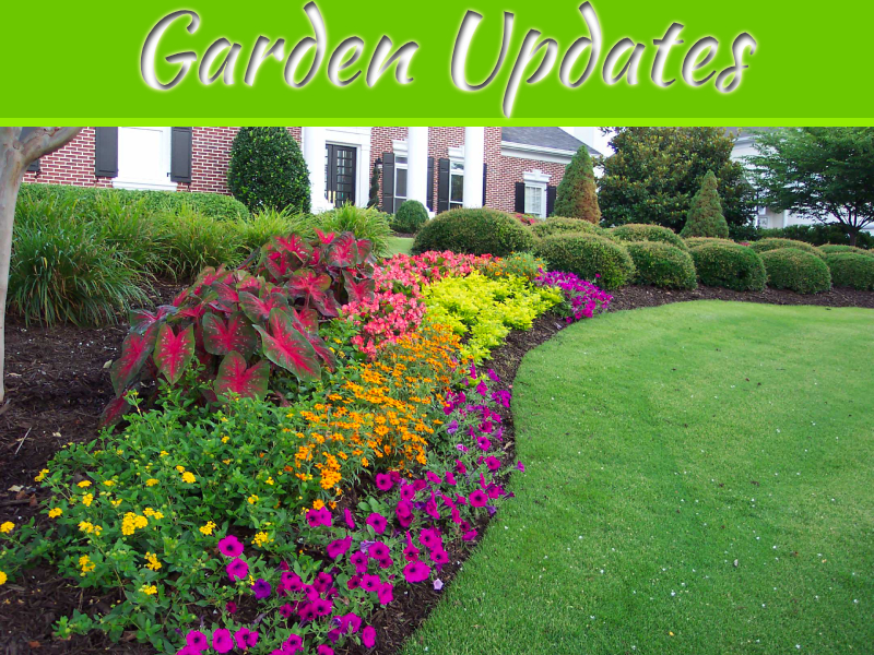 Top 5 Garden Updates to Increase Your Home's Sale Appeal