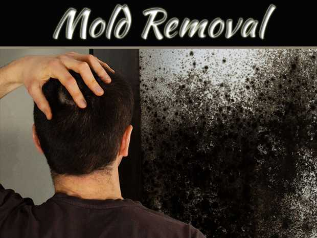 Things to Consider When Trying to Find the Right Mold Removal Service