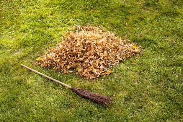 Why You Should Not Allow Dead Leaves To Settle Down In Your Garden