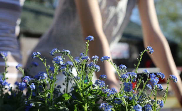 6 Ways To Get Your Yard Ready For Summer