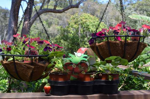 Modular Gardening