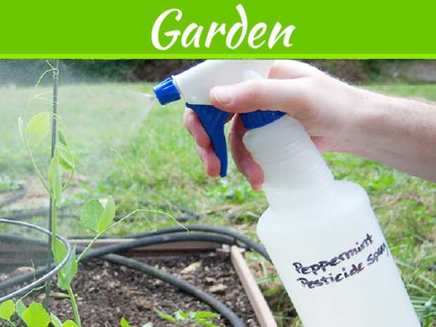 7 All Natural Methods To Control Pests In Your Garden