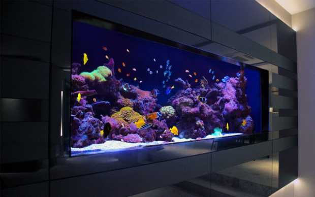Contemporary Aquarium