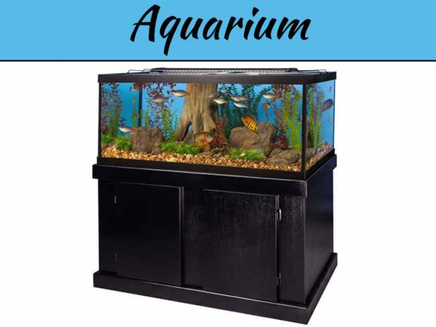 making-your-home-environment-better-with-help-from-an-aquarium