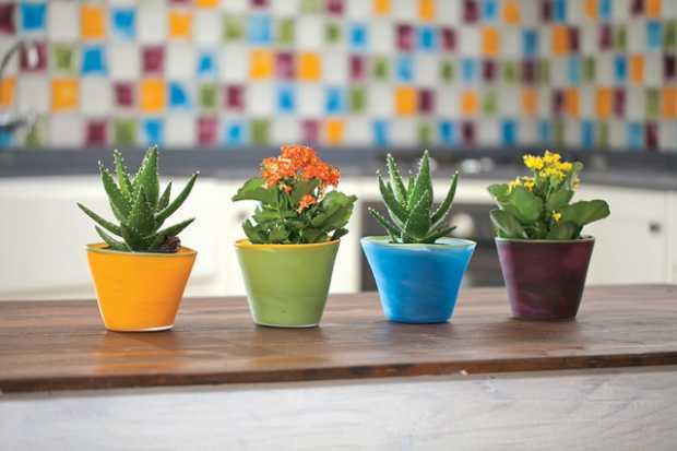 Flower Pots Arrangement