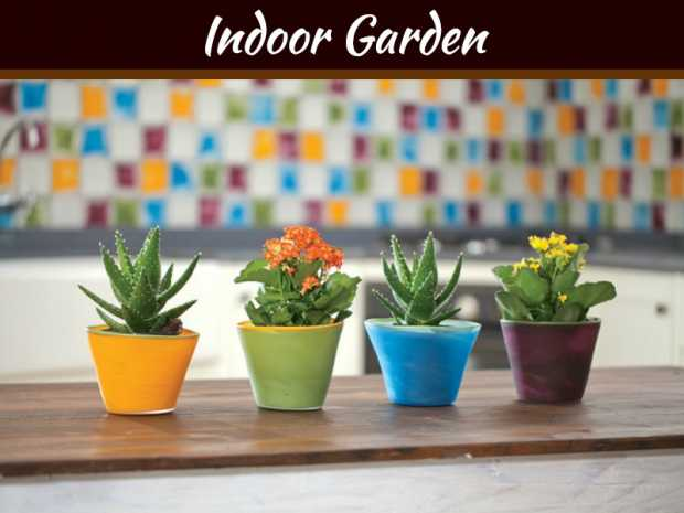 Creative Ways to Decorate Your Garden with Potted Plants