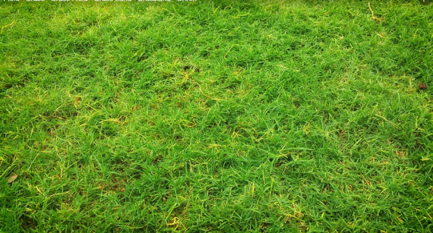 4 Warning Signs You Should Tear Up Your Lawn And Start Fresh
