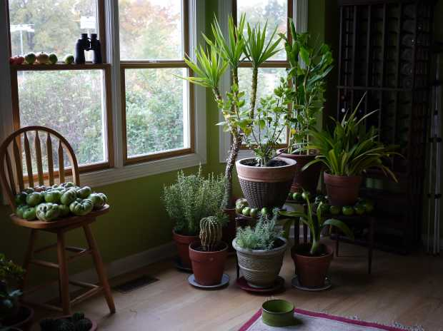 5 Ways to Keep Your Plants Alive Through the Winter