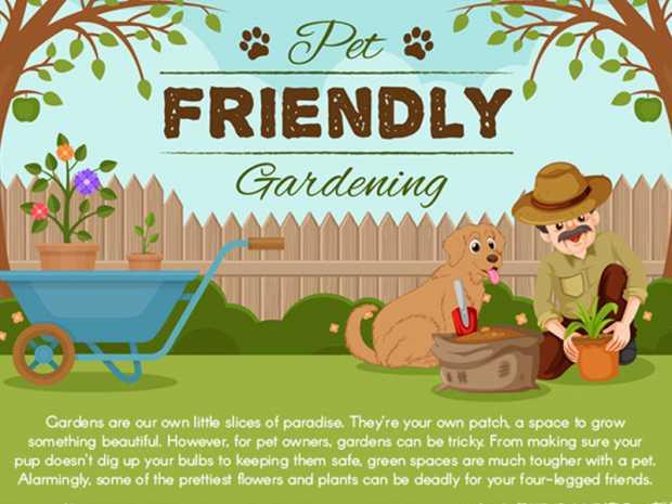 Pet Friendly Gardening