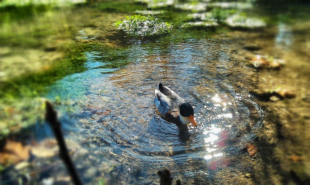 4 steps to help you build your own backyard pond my for Build your own fish pond