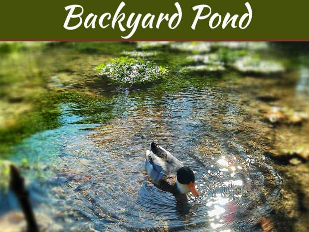 4 Steps to Help You Build Your Own Backyard Pond