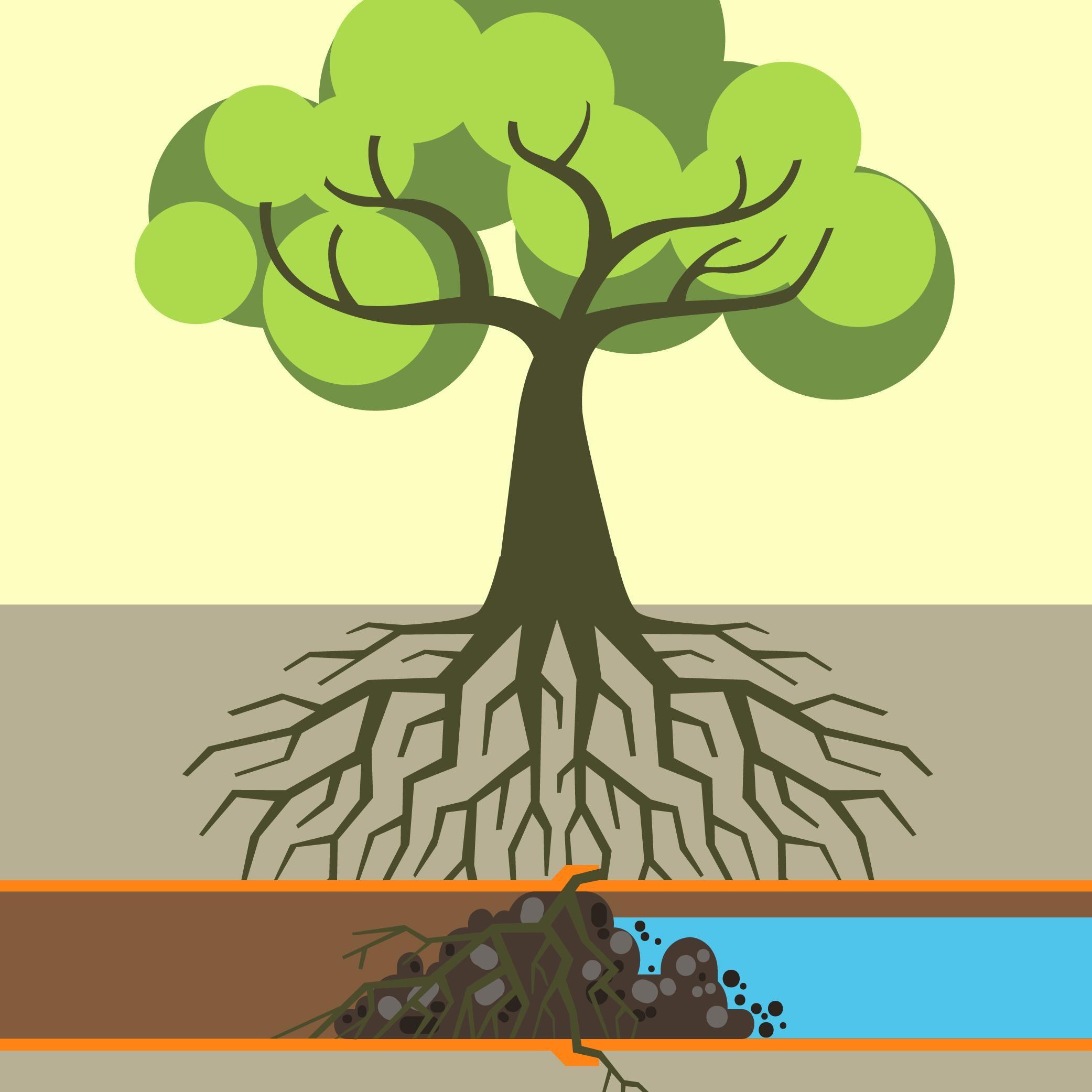 Aggressive Roots