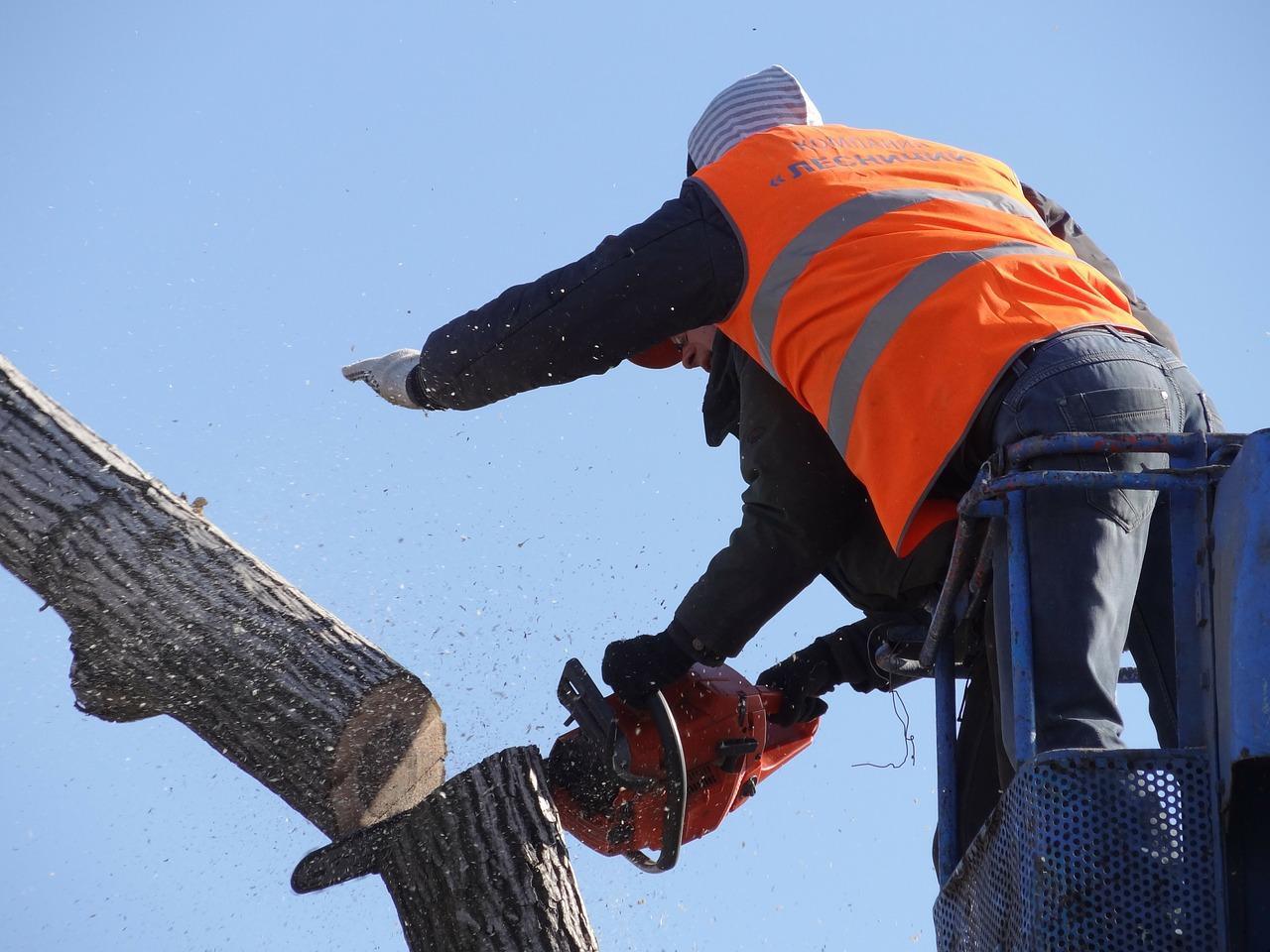 Tree Cutting Permission