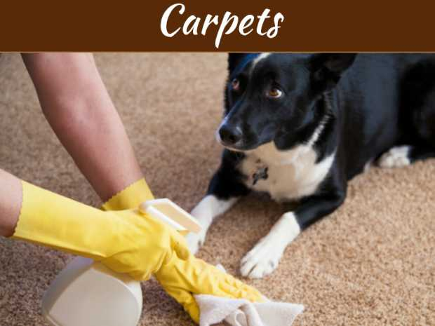 A Dog Owner's Guide to Cleaning Carpets