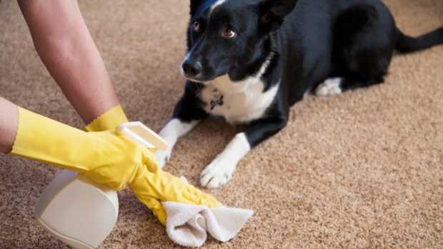 Disinfecting Carpets