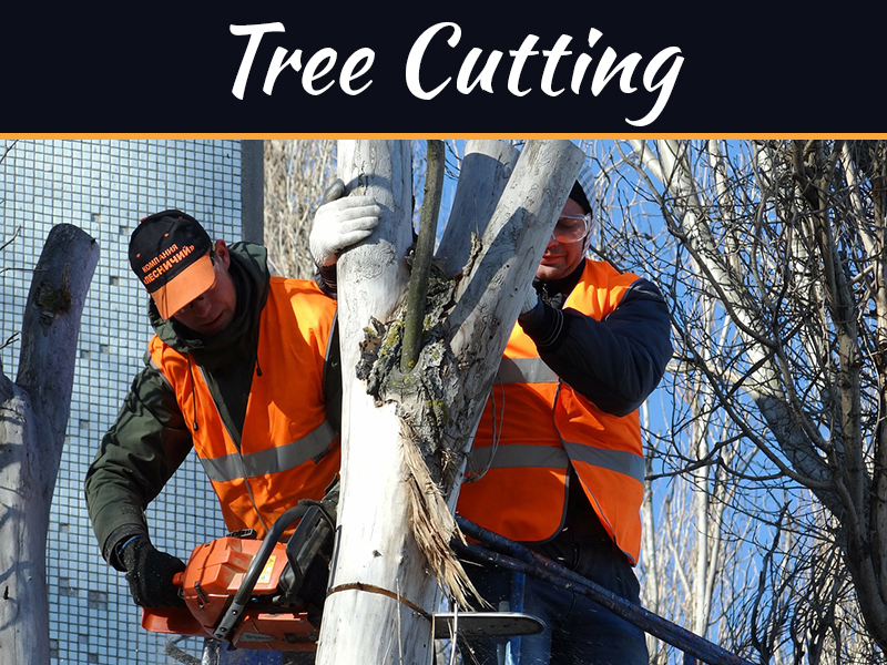 How to Cut Down a Tree Safely