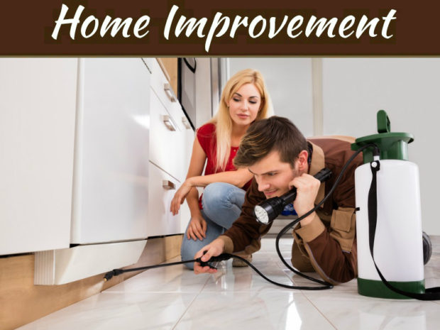 How Regular Termite Inspections Protect Your Home?