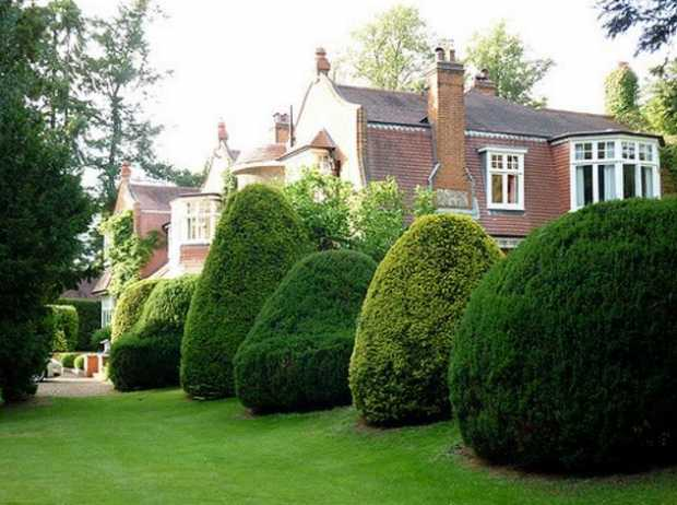 Trim Shrubbery and Trees On Your Property