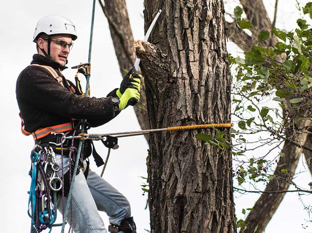 Local Tree Expert
