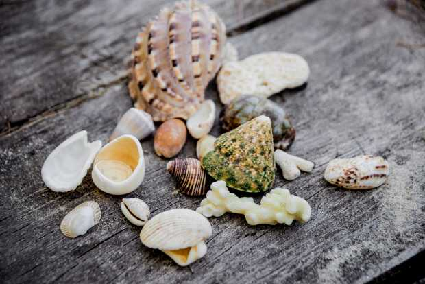 Seashells With Fishing Net