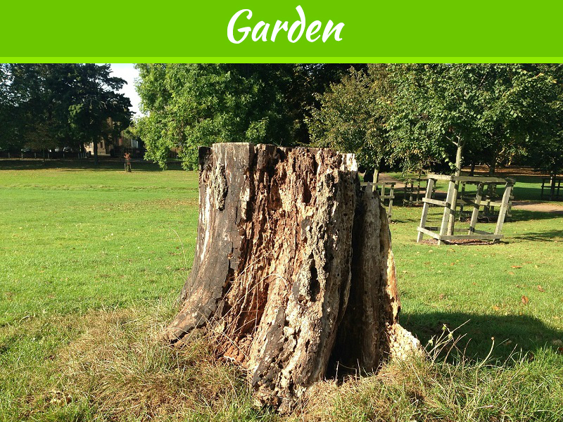 Why Do You Need a Tree Stump Removal Service?