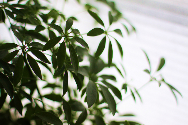 Decorate With Houseplants