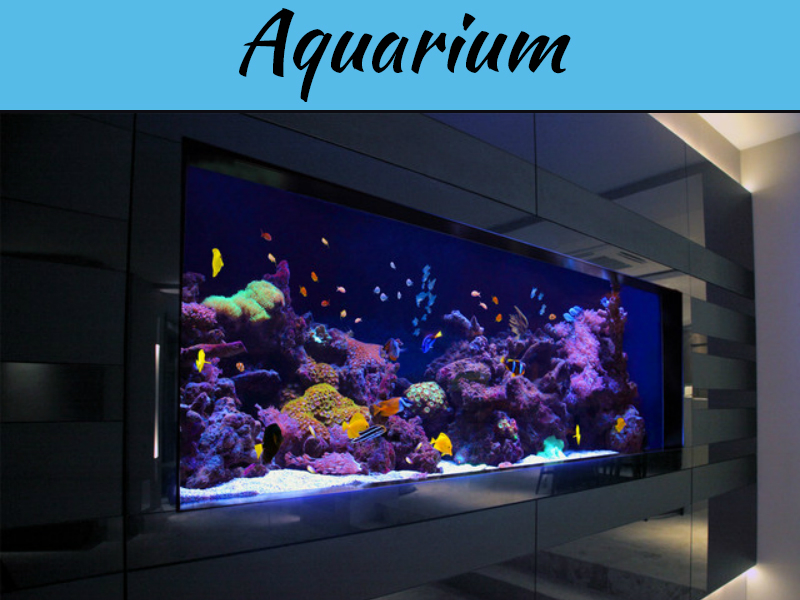 3 Tips To Caring For Your Fish Tank