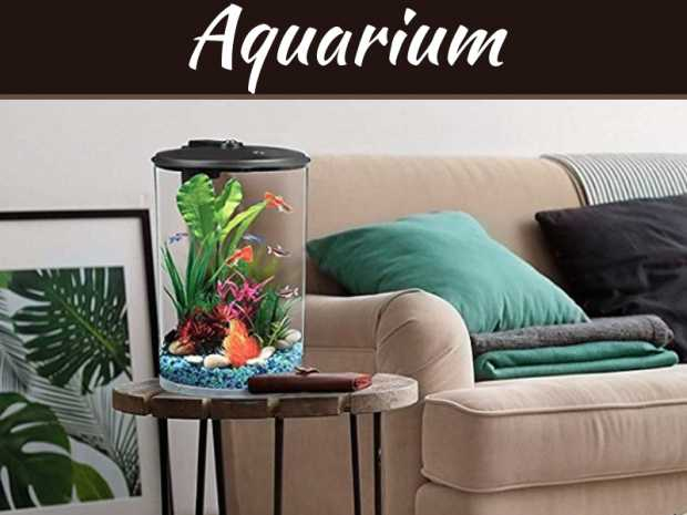 small fish tank | My Decorative