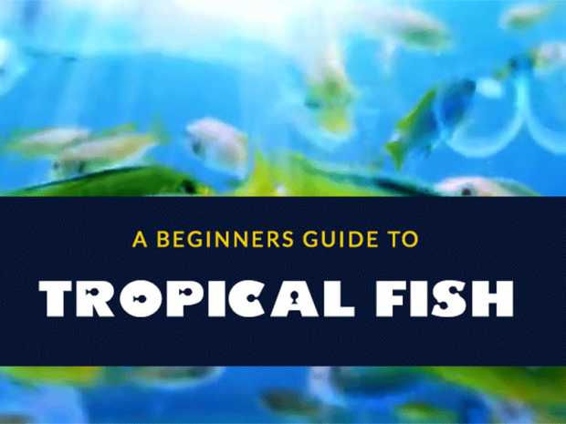 5 Tropical Fish You Should Include In Your Aquarium