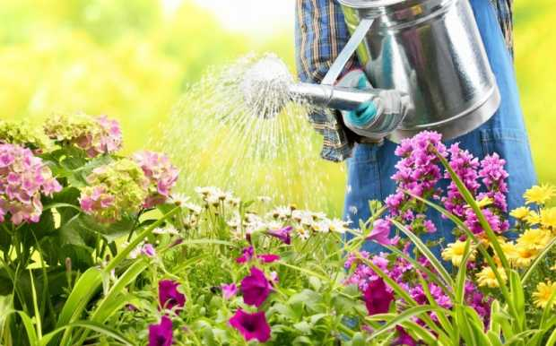 Regular Watering in Garden