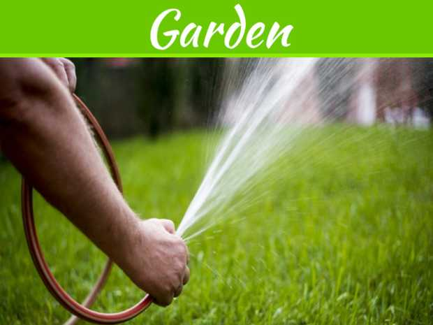 How To Keep Your Lawn Looking Great All Year