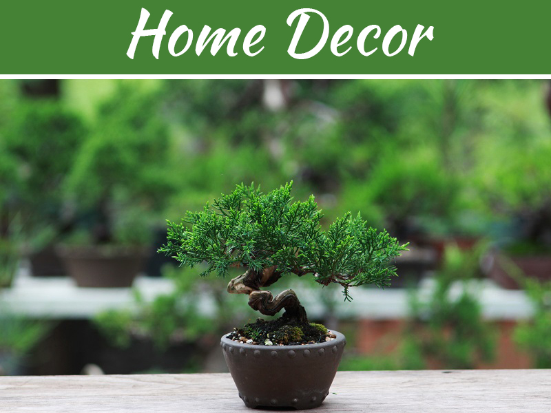Give A Touch of Nature to Your Drawing Room by Japanese Black Pine