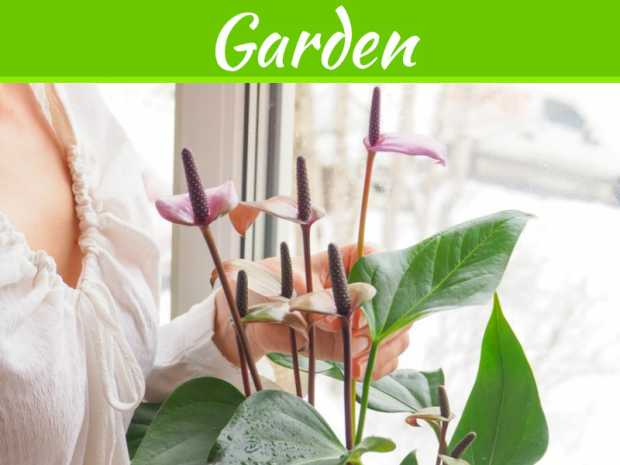 Indoor Plants 101: What To Consider Before Choosing And Using Them In Your Home