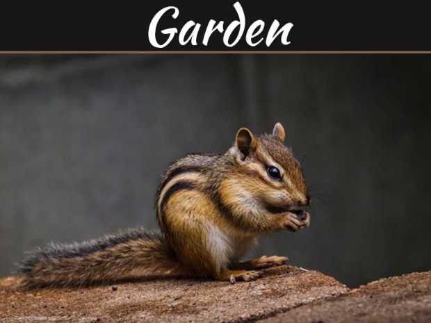 5 Tips To Keeping Animals Away From Your Garden