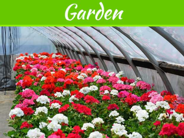 Easy Ways to Keep Your Garden Nursery Health