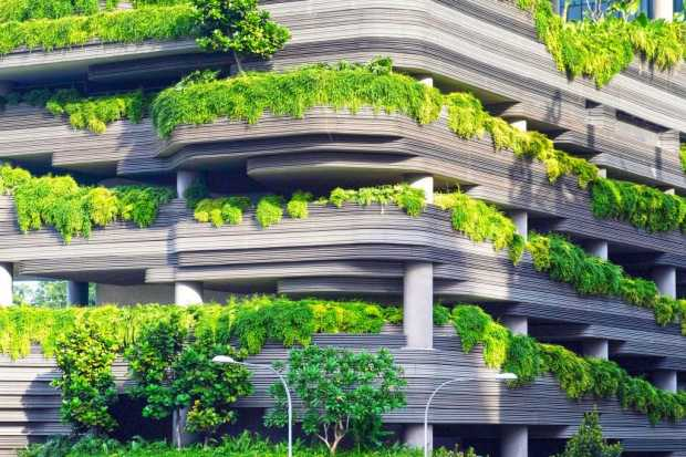 Energy Efficient Rooftop Gardens