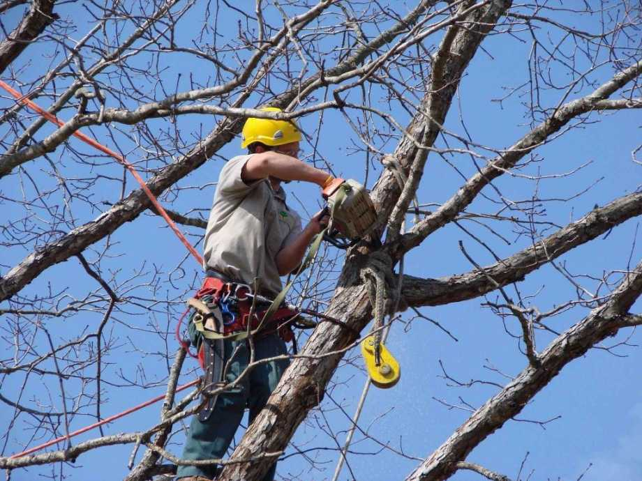 Removing Tress And Other Animals From Your Property