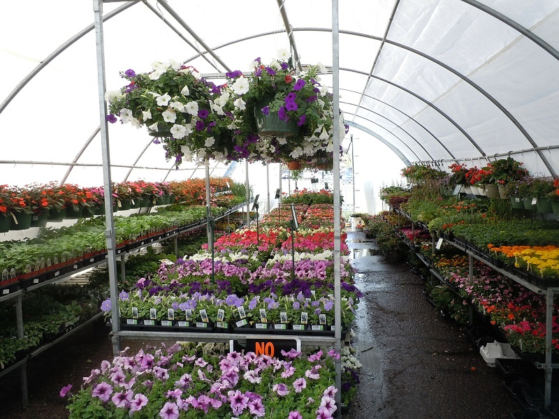 Maintain Garden Nursery