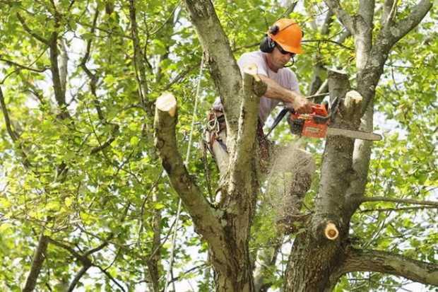 Tree Trimming Job