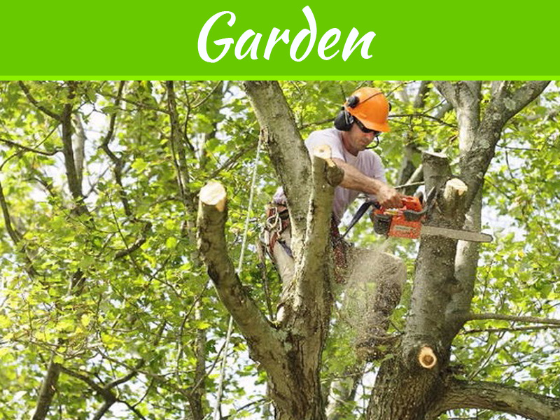 What Affects The Cost Of A Tree Trimming Job?