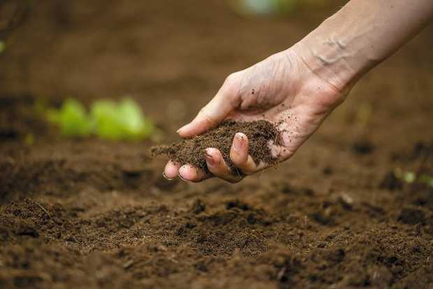 Good Soil And Proper Drainage
