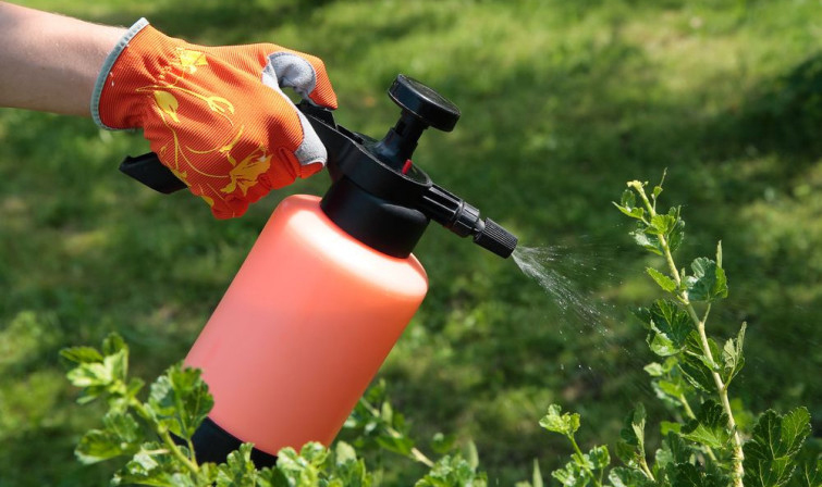 Effective Pest Control Tactics