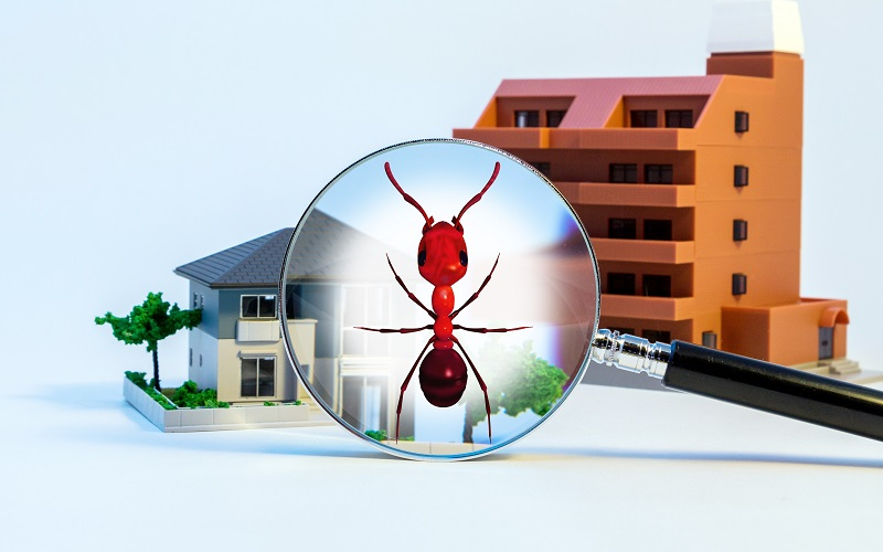 Reasons Leading Towards High Demand Of Termite Inspection