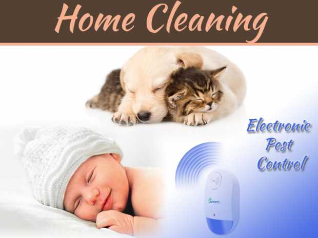 Top 5 Effective Electronic Pest Control Ideas