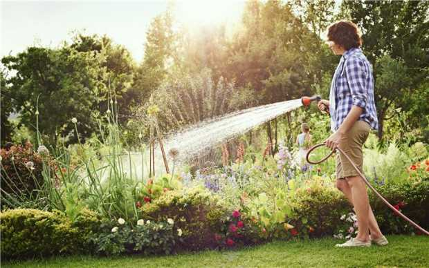 Water Your Grass With One Inch Of Water Per Week