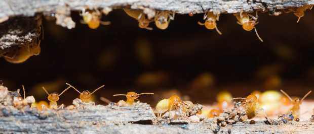 Why Go For Regular Termite Inspections