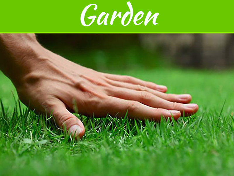 Why Lawn Care Is So Important To The Way Your Home Looks