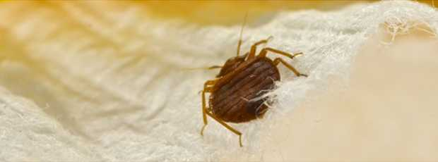 How to Control Bed Bugs